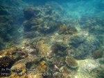 621_8d-Coral_20150405_IMG_5461GT.jpg