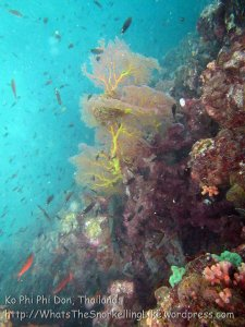 702_10a-Currenty-Wall-Seafan_20150403_IMG_5114.jpg