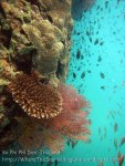 703_10a-Currenty-Wall-Seafan_20150403_IMG_5106.jpg