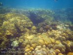 722_10f-Better-Coral_20150403_IMG_5070.jpg