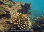 723_10f-Better-Coral_20150403_IMG_5071.jpg