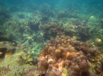 727_10g-Scabby-Corals_20150403_IMG_5058.jpg