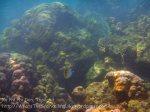 729_10g-Lined-Butterflyfish_20150403_IMG_5057.jpg