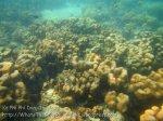737_10hi-Scummy-Corals_20150403_IMG_5032.jpg
