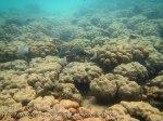 739_10hi-Scummy-Corals_20150403_IMG_5026.jpg